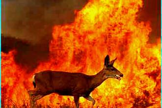 Americanii, loviti de dezastre. Incendiile de vegetatie au omorat un om