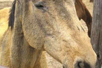 A vrut sa pupe calul, iar animalul i-a smuls buzele