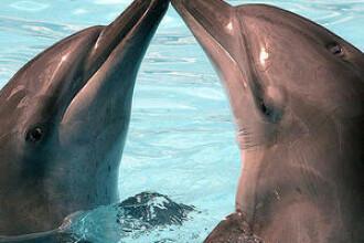 Vezi aici cum ti-o poti fura de la un delfin!
