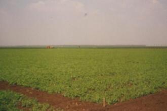 Din Granarul Europei, Romania a ajuns codasa la agricultura