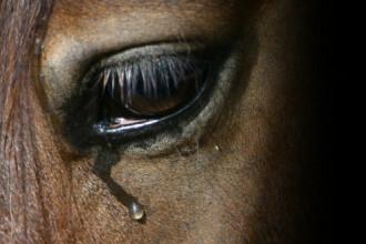 Zeci de cai de rasa dintr-un grajd din Ialomita, numai piele si os