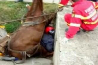 Momente dramatice! S-a trezit cu calul de 400 de kilograme peste el!