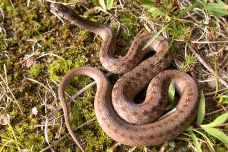 Pasiune veninoasa: vrea sa stea in casa cu 40 de serpi!