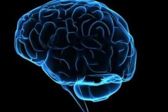 Pretul pe care oamenii trebuie sa il plateasca pentru o viata lunga si un creier mare