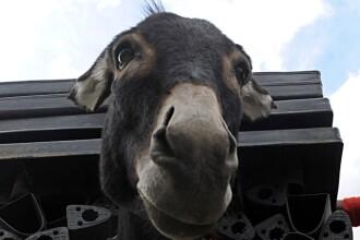 Zoo Oradea a scos la licitatie 500 de animale. Cat te costa ca sa ai un magarus in curte