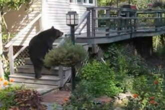 VIDEO. Cum a pus o femeie pe fuga un urs care voia sa intre in casa ei. Imaginile au ajuns virale