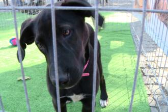 S-a stabilit taxa de adoptie la distanta pentru animalele fara stapan din Timisoara. Cat costa sa tii un caine in adapost