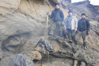 Un copil de 11 ani a descoperit un mamut aproape intact, vechi de 30.000 de ani
