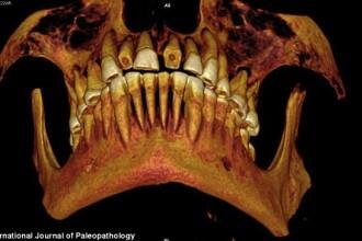 FOTO. Cercetatorii sunt uimiti. Ce au gasit in craniul unei mumii egiptene de acum 2.000 de ani