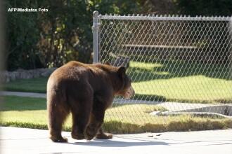Un ursulet brun de 4 luni a fost gasit intr-o gospodarie din Sovata