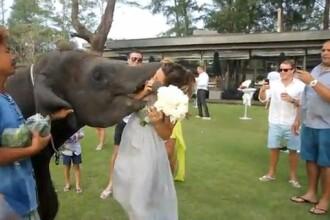 Scene de infarct la o nunta, in Thailanda. Ce-i face elefantul domnisoarei de onoare. VIDEO