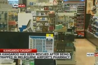 Aparitie neasteptata intr-o farmacie din Australia. Cu cine au dat nas in nas angajatii