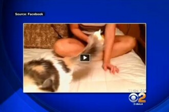 Femeie arestata dupa ce si-a incendiat pisica si a pus filmarea pe Facebook