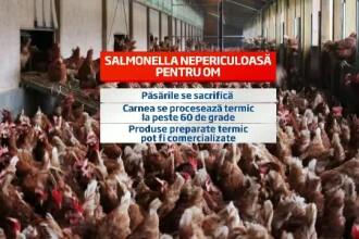 18 tone de carne de pui retrase de pe piata. Avicola Calarasi hraneste 8% din populatia Romaniei