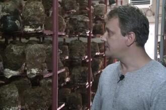 Tiberiu, tanarul care si-a inceput afacerea cu ciuperci asiatice dupa ce s-a documentat pe net. Un kg se vinde si cu 300 lei