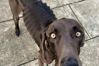 Povestea lui Alex, cainele care s-a hranit doar cu pietre si crengute, salvat in ultima clipa de iubitori de animale