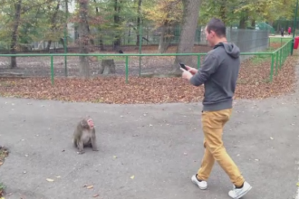 Atractia neobisnuita de la Gradina Zoologica din Targu Mures. Un macac japonez este