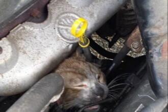 Un motan a supravietuit miraculos dupa ce a stat 2 ore langa motorul incins al unei masini. GALERIE FOTO