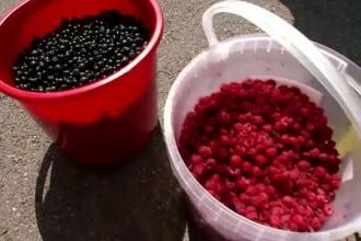 Recolta de fructe de padure, compromisa din cauza secetei. Cu cat vor creste preturile dupa un an in care totul a mers prost