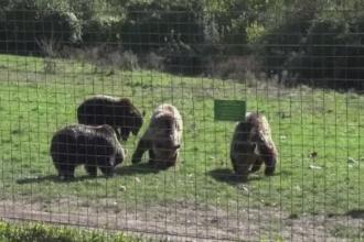Petrecerere la rezervatia de ursi din Zarnesti. O actrita celebra din