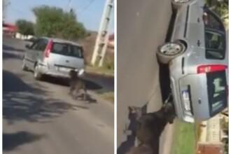 Cum a inteles un barbat din Ilfov ca trebuie sa-si scoata cainele la plimbare. Cruzimea lui a starnit revolta tuturor: VIDEO