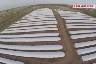 Solutia de depozitare a granelor, de 100 de ori mai ieftina decat un siloz. La ce folosesc aceste benzi albe aparute pe camp