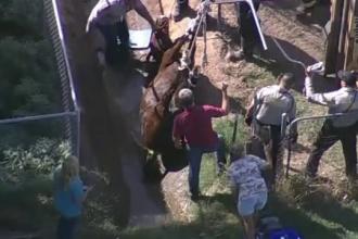 Misiunea de salvare a unui cal din Arizona, care a cazut intr-un sant. Animalul