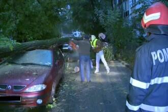 Un copac s-a prabusit peste trei autoturisme in Sectorul 3 al Capitalei.