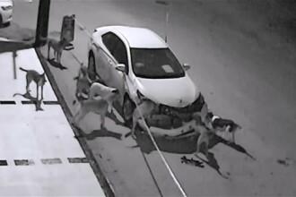 Masina devastata in toiul noptii de un grup de caini ai strazii. Ce ar fi provocat comportamentul ciudat al animalelor. VIDEO