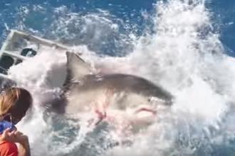 Intalnirea terifianta a unui scafandru cu un rechin urias, intr-o cusca. Ce s-a intamplat dupa ce o bara s-a rupt. VIDEO