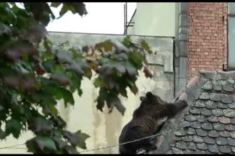 Dosarul in cazul ursului impuscat la Sibiu se muta la Curtea de Apel din Alba Iulia. De ce s-a luat aceasta decizie