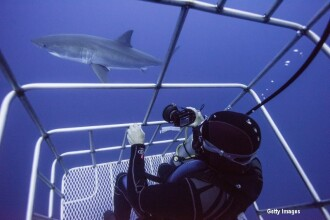 Momentul terifiant in care un rechin intra in cusca unui scafandru. Ce se intampla in secunda urmatoare. VIDEO