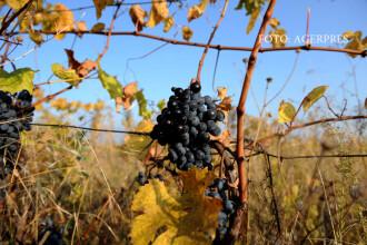 """Vinul nostru incearca sa scape de renumele prost si izul de DNA. """"Multi consumatori spun 'Romania, vin, pe bune?'"""