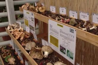 Expoziţie de ciuperci, la Iaşi. Cum pot fi recunoscute cele care ucid în câteva minute