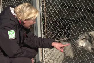 O fostă polițistă olandeză a venit pe jos pânâ în România pentru a ajuta câinii fără stăpân