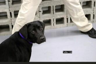"""Câine antrenat de CIA, """"concediat"""" după ce și-a pierdut interesul în a detecta bombe"""