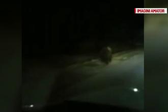 Incident straniu în Dâmbovița. Urs filmat în zona de câmpie, departe de pădure