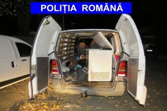 Poliţia a oprit un transport ilegal de sturioni. Cât valorau peştii