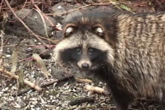 Un animal rar reîncepe să apară în România. Imaginile surprinse de câțiva pescari