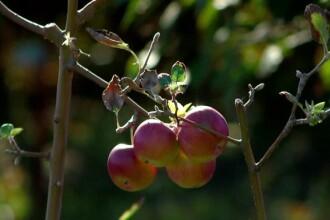 Soluția horticultorilor pentru a salva pomii fructiferi românești