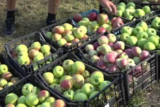 Producția de mere, aproape dublă față de anul trecut. Producătorii de suc natural nu mai fac față cererilor