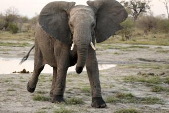 Un bărbat a murit după ce a fost călcat în picioare de un elefant, în Botswana