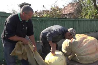 Dovleacul de aproape 300 kg crescut într-o curte din Sovata. Secretul, dezvăluit de proprietar