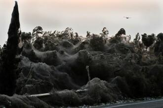 O pânză de păianjen de un kilometru a acoperit o zonă din Grecia