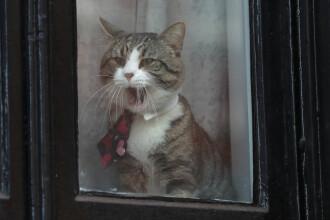 Ecuadorul, în proces cu Julian Assange. Scandalul ar fi pornit de la pisică