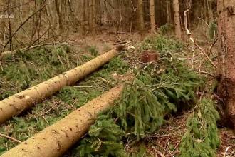 Proiect de lege: Tăierea sau scoaterea din rădăcini a arborilor, închisoare până la 5 ani