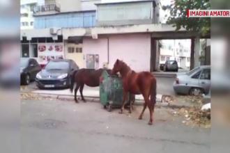 Doi cai au fost filmați în timp ce mâncau dintr-un tomberon, într-un cartier din Brăila