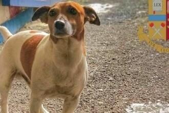 Mafia italiană oferă recompensă pentru uciderea unui câine polițist. Care este motivul