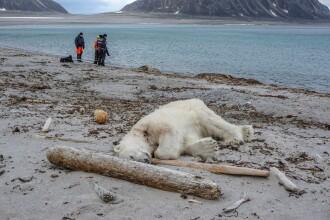 """Planeta a rămas fără 60% din animalele sălbatice. """"Ultima generație"""" care poate salva natura"""