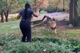 Scene șocante filmate la un zoo din SUA. O femeie a sărit în cușca leilor. VIDEO
